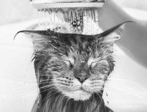 Kreativität: Warum du die besten Einfälle unter der Dusche hast